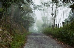 road near the trees in the fog