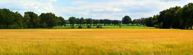 colourful Cereals Field Panorama Landscape