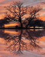 reflection of a bare tree during sunset in a lake