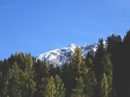 Mountain covered with Snow beneath coniferous forest
