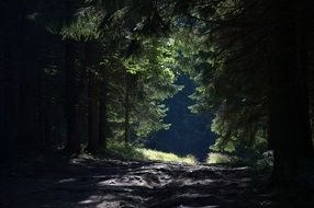 soil road in dark Forest, poland, beskids