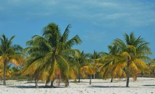green palm trees on white sand beach