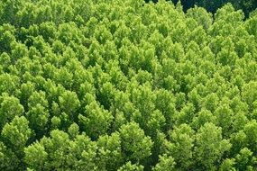 panoramic view of the green forest like a carpet