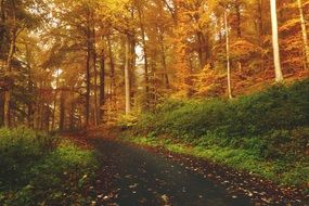 walk Path in Autumn forest at sunset