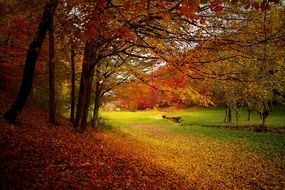 Autumn Forest Woods Nature Fall