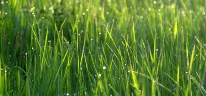 Drops of water on a Grass