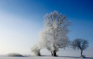 snow covered trees on a sunny day