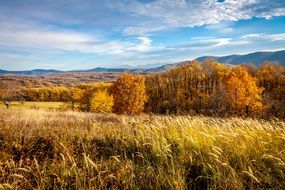 autumn field on a background of golden trees