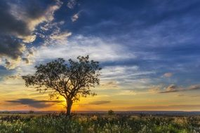 lonely tree on a background of bright sunset