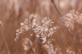 reed grass in wetland