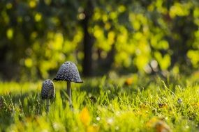 wild mushrooms in a sunny meadow