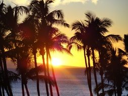 Photo of the palm trees on a beach at the sunset