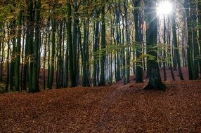 bright sunlight through forest trees