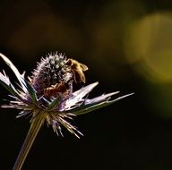 bee pollinating wild purple flower