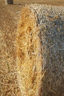 hay bale after harvesting close-up
