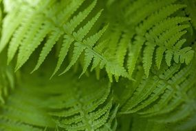 natural green fern leaves