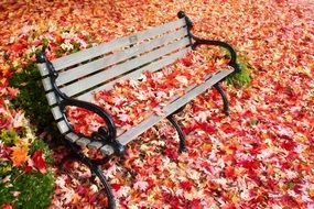 autumn fall leaves on bench