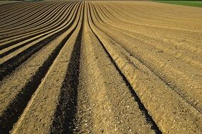 seed furrows on the field