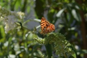spotted brown butterfly among green nature