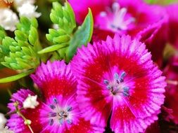 bright pink summer flowers closeup