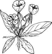 black and white drawing of a wild flower