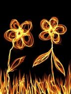 drawn fire flowers