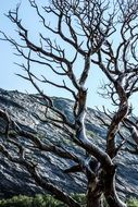leafless tree in mountains