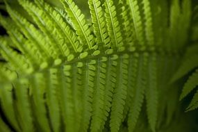 pointed bright fern leaf close-up