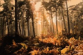 Sunlight in scenic Foggy Autumn Forest