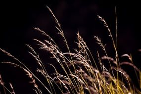 Grasses Seeds Nature Meadow