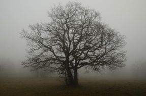 tree with bare twisted branches in the fog