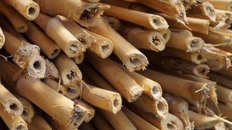 stack of dry Bamboo stems