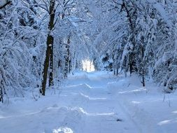 Snow Forest Path