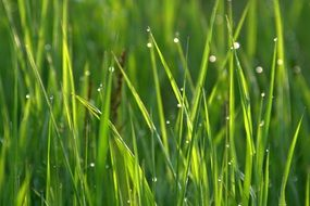 green grass in water drops close up
