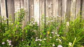meadow flowers along the wooden fence