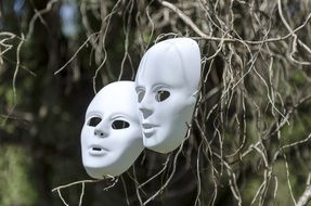 white masks on dry branches