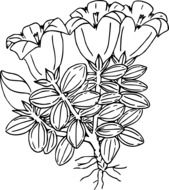 black and white drawing of wild flowers