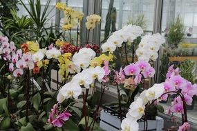 variety of orchids near the window