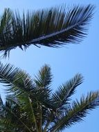 green palm leaves against blue sky