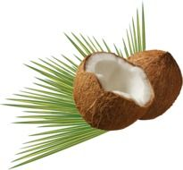 drawn two halves of coconut