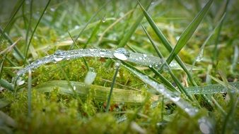 drops of morning dew on Grass, macro