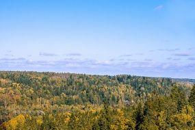 panoramic view of a pine forest on a sunny day