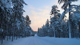 snowy road among coniferous forest