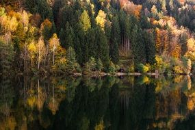 colorful autumn forest by the lake in october