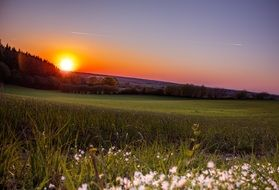 romantic sunset on the wild meadow