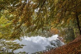 Golden trees mirroring on calm water, Autumn landscape