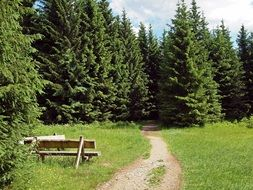 hiking path in a dense fir forest