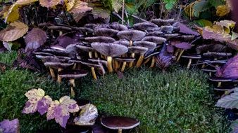 purple mushrooms on the forest cover