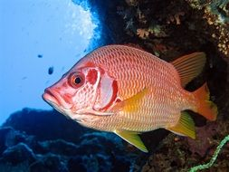 red Fish Underwater
