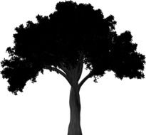 black tree silhouette on a white background